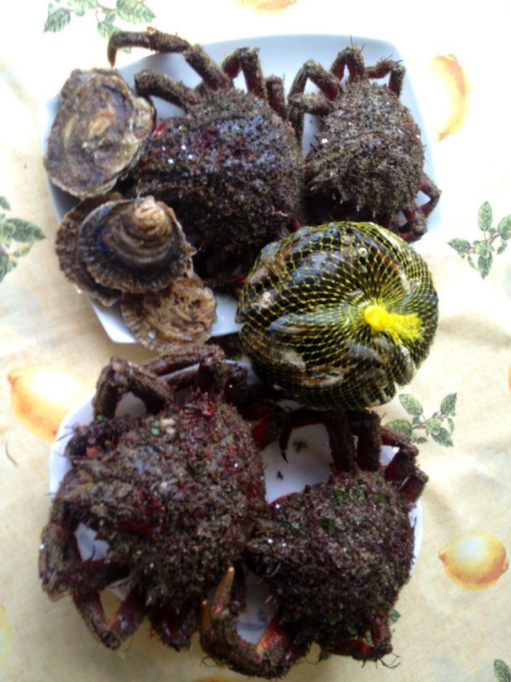 marisco fresco desde galicia a tu casa